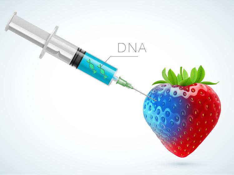 DNAstrawberry-01